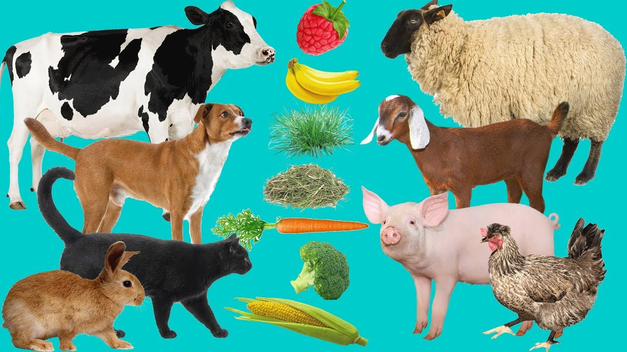 PP1 Online Class- Foods for domestic animals | Tassia School